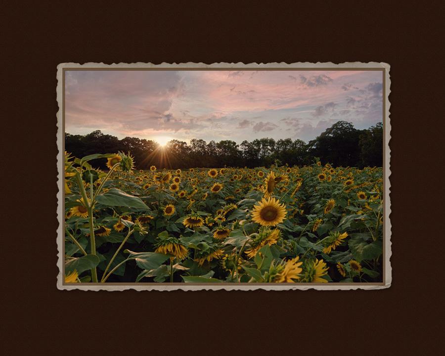 September Sun | Charlotte Ashley Photography