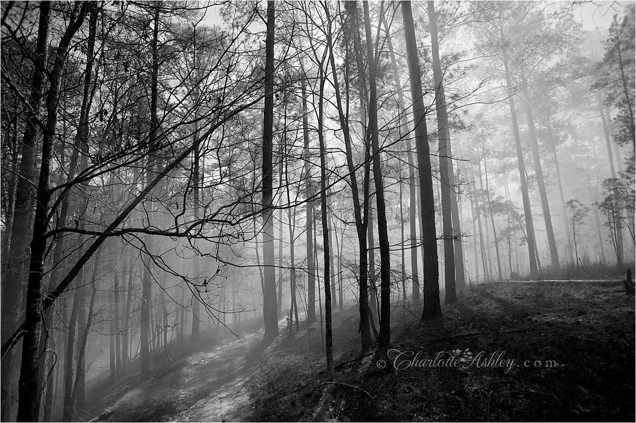 Prescribed Burning   Charlotte Ashley Photography