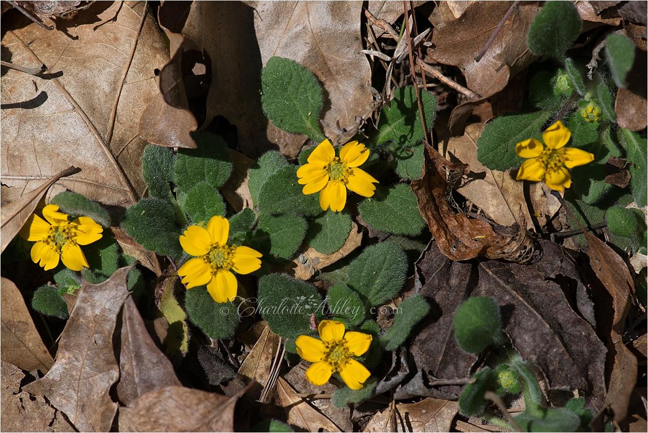 Spring Flowers | Charlotte Ashley Photography